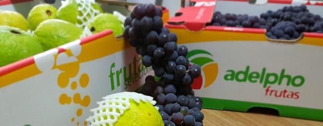 Obrigado – Adelpho Frutas Ltda